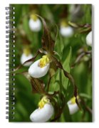 Mountain Lady Slippers Up Close Spiral Notebook
