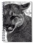 Mountain Lion Bw Spiral Notebook