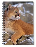 Mountain Lion On Snow-covered Rock Outcrop Spiral Notebook