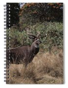 Mountain Nyala Spiral Notebook