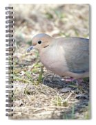 Mourning Dove 2 Spiral Notebook