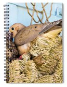 Mourning Dove And Chick Spiral Notebook