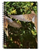 Mourning Doves Wings  Spiral Notebook