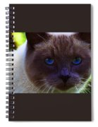 Mr. Blue Eyes Spiral Notebook