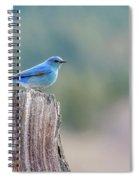 Mr. Bluebird Spiral Notebook