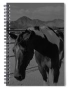 Mr Ed In Black And White Spiral Notebook