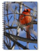 Mr. Red Beauty Spiral Notebook