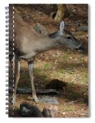 Ms Doe Spiral Notebook
