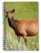 Ms. Elk Spiral Notebook