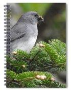 Mt Mitchell Junco Spiral Notebook