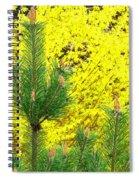 Mugo Pine And Forsythia Spiral Notebook