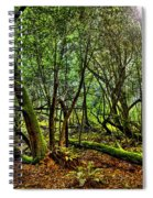 Muir Woods Rejuvenation Spiral Notebook