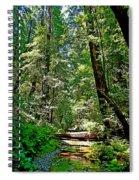 Muir Woods Study 22 Spiral Notebook