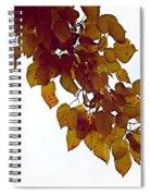 Mulberry Autumn Spiral Notebook