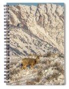 Mule Deer Buck In Winter Sun Spiral Notebook