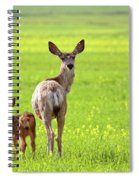 Mule Deer Doe And Fawn Looking Back Over Their Shoulders Spiral Notebook