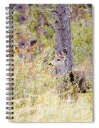 Mule Deer Doe In The Pike National Forest Spiral Notebook