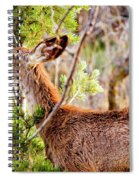 Mule Deer Foraging On Pine On A Colorado Spring Afternoon Spiral Notebook