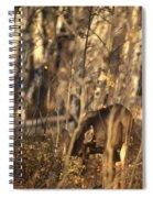 Mule Deer In Aspen Thicket Spiral Notebook