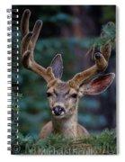 Mule Deer In Velvet 02 Spiral Notebook
