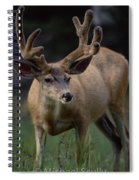 Mule Deer In Velvet 03 Spiral Notebook