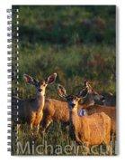 Mule Deer In Velvet 04 Spiral Notebook