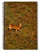 Mule Deer - Mattole Beach Spiral Notebook