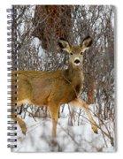 Mule Deer Portrait In Heavy Snow Spiral Notebook
