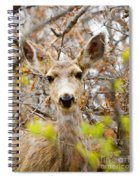 Mule Deer Portrait In The Pike National Forest Spiral Notebook