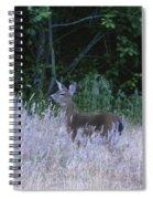 Mule Deer - Sinkyone Wilderness Spiral Notebook