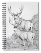 Mule Deer Study Spiral Notebook