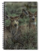 Mule Deer Visitors At Sunset Spiral Notebook