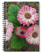 Multicolored Gerberas Spiral Notebook