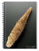 Mummy Of Crocodile, Egypt, 2000-1001 Bce Spiral Notebook