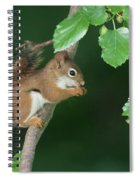 Munching Mulberries Spiral Notebook