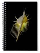Murex Shell Spiral Notebook