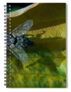 Musca On Display Spiral Notebook