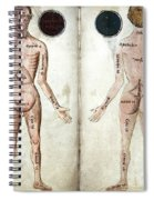 Muscle Man, Brains Ventricles, 15th Spiral Notebook
