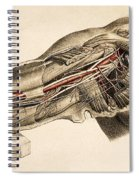 Muscles And Blood Vessels In Arm, 1851 Spiral Notebook
