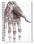 Muscles, Hand, Albinus Illustration Spiral Notebook