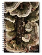 Mushroom Shells By The Lake Shore Spiral Notebook