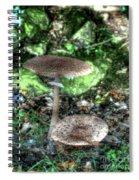 Mushrooms Hdr Spiral Notebook