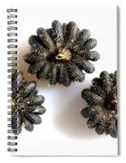 Musk Mallow Seeds Spiral Notebook