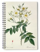 Musk Rose Spiral Notebook