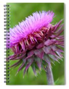 Musk Thistle Blooming Spiral Notebook