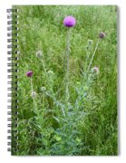 Musk Thistle In Full Glory Spiral Notebook