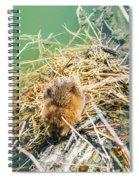 Muskrat Sun Bathing Spiral Notebook