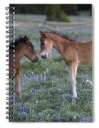Mustang Foals Spiral Notebook