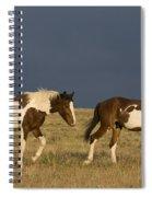 Mustangs In Nevada Spiral Notebook