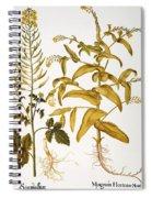 Mustard Plant, 1613 Spiral Notebook